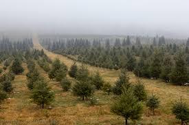 Loudoun tree farm