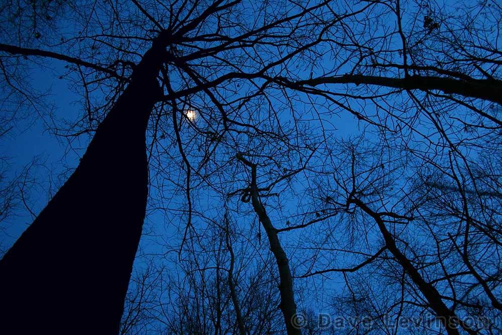 night blue trees moon