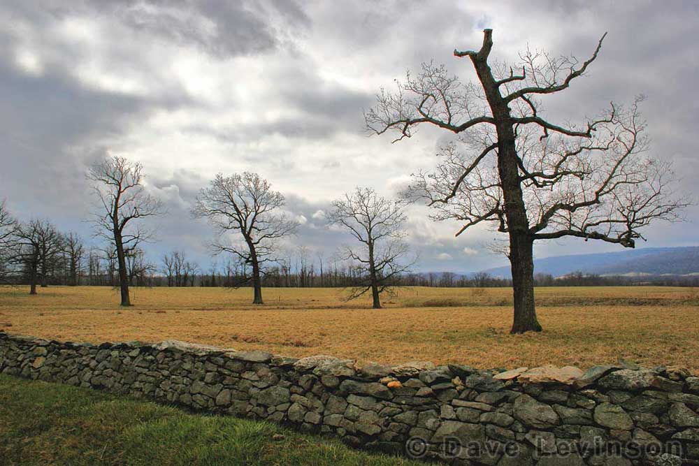 old trees pasture field stone fence