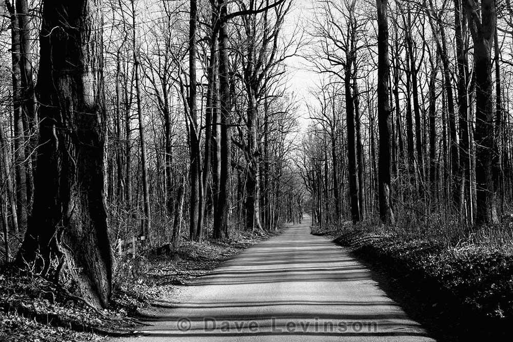 dirt road trees Loudoun