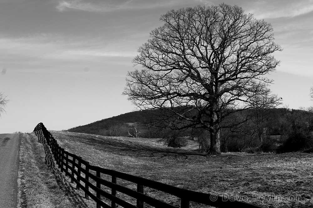 Tree fence pasture