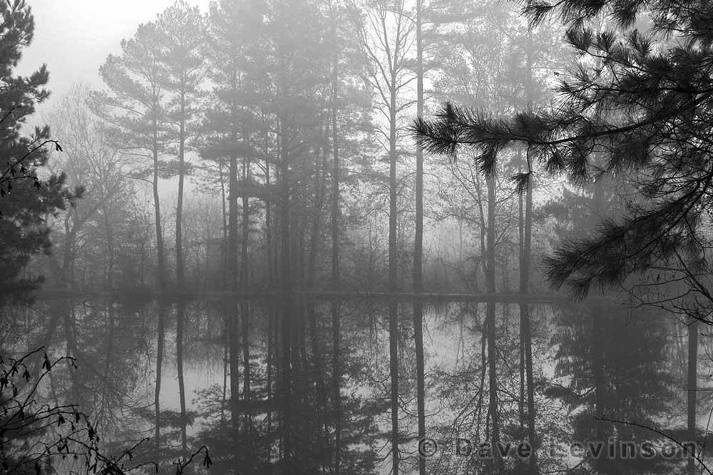fog pond tress reflection